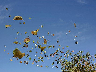 Freedom falling, leaves, 2013 / inkjet print on paper transferred on alubond, 75 x 100 cm